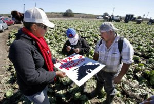 Immigration advocate Nidia Soto gathers signatures from farm workers in a lettuce field in Castroville, Calif., on Oct. 3. Advocates are hopeful Congress can pass immigration reform. (Vern Fisher/Monterey County Herald)